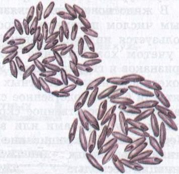 Биоэлементы.  Схема фотосинтеза.  Строение ядра биология.  Категория.