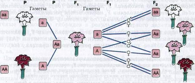 Закон неполного доменирования