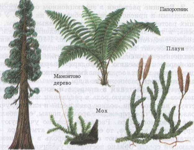 Высшие растения строение и размножение