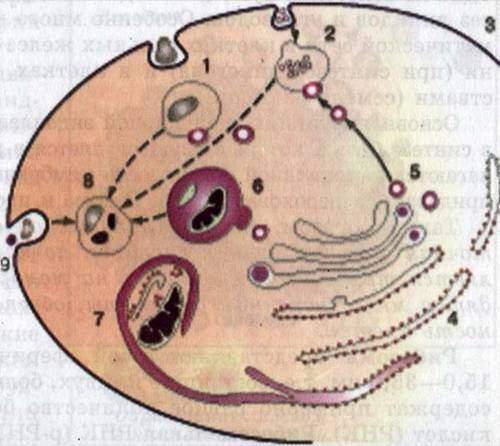 происходящие в клетке