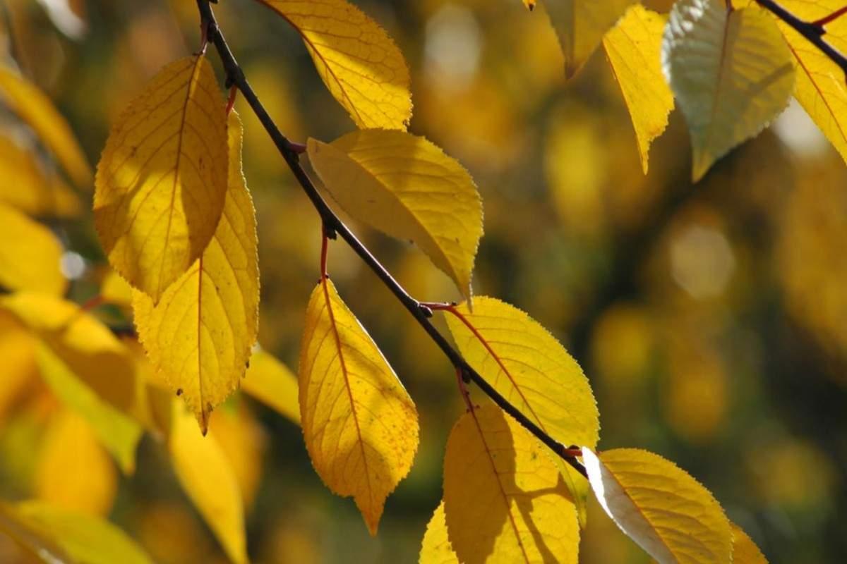 Значение растений в природе и жизни